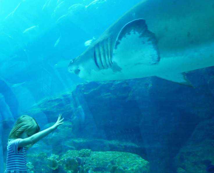 Round the world with my family at Dubai aquarium