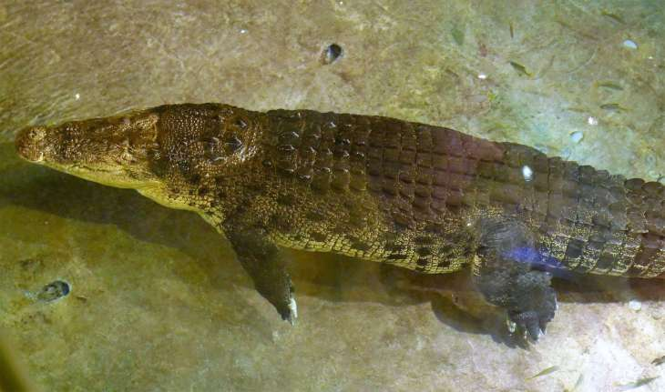 Family-Travel-Blog-Dubai-Crocodile